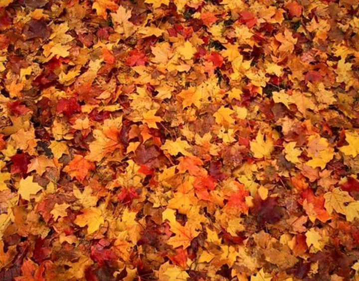 How to Care for Your Lawn During the Fall